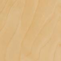 Curly Birch